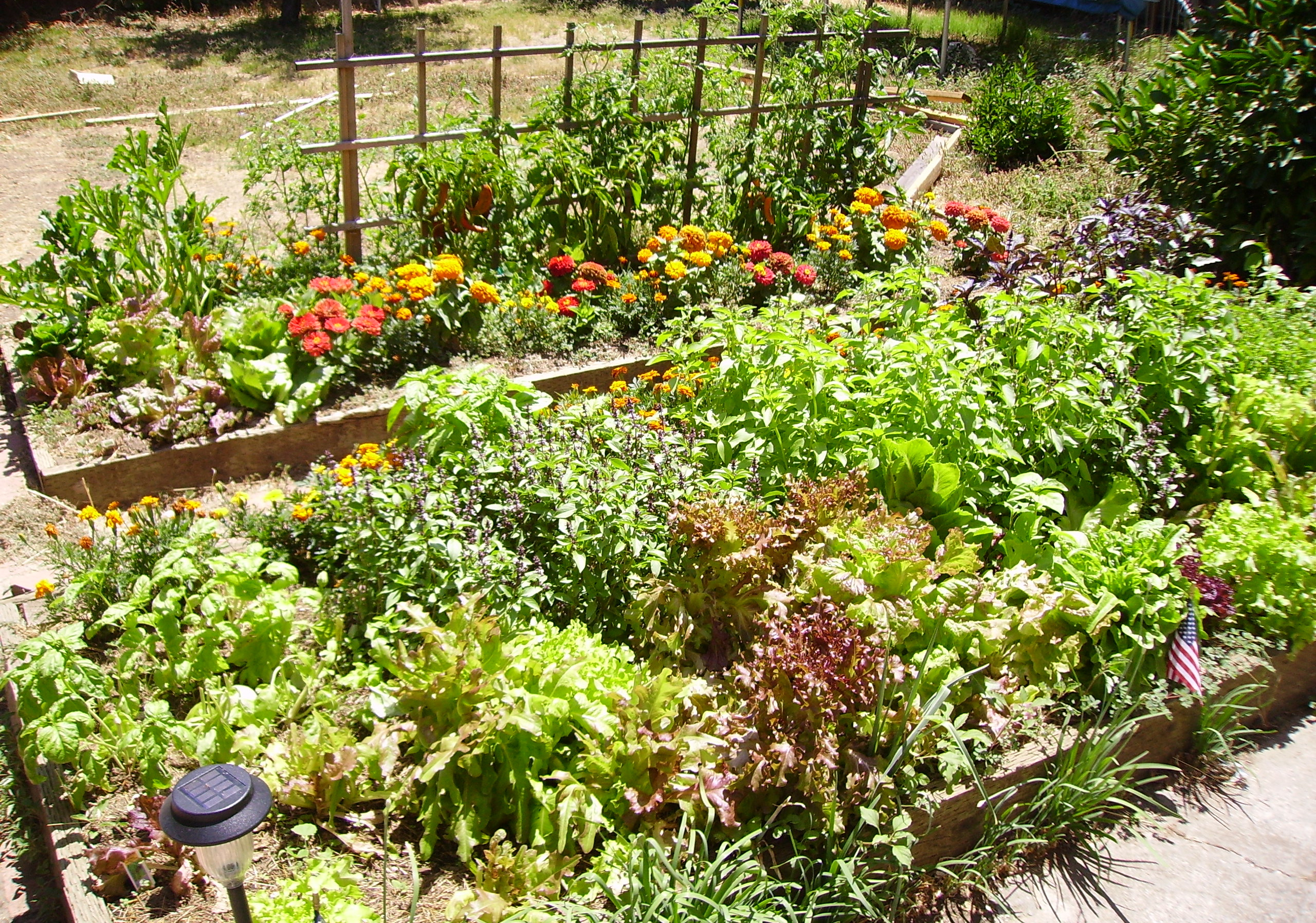 Come see the Kilton Library community garden! | Lebanon Public ...